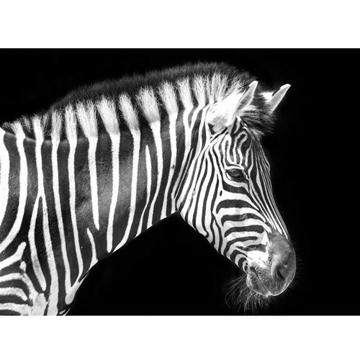 Picture of Stunning Stripes Canvas
